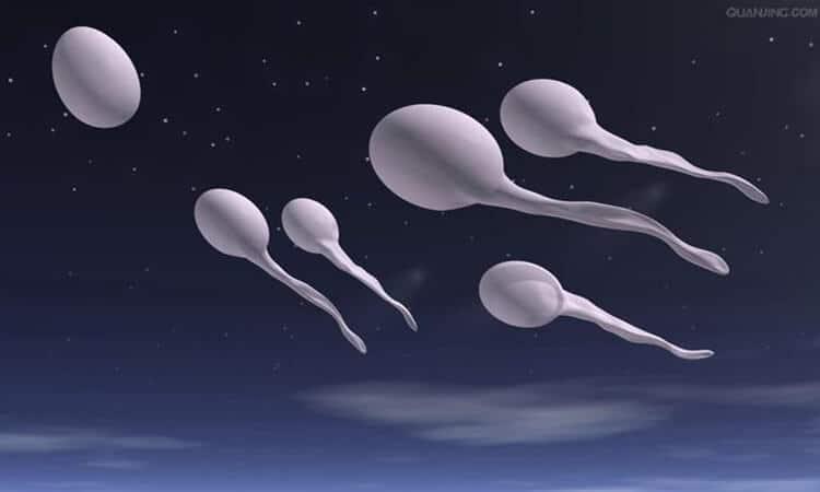 精子,锐减
